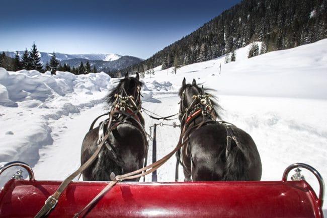 Pferdekutschenfahrt, Pferdeschlittenfahrt in Filzmoos - Hofalmen - Oberhofalm Filzmoos